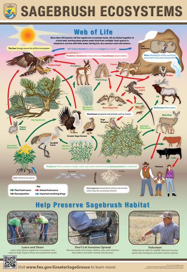 Sagebrush Ecosystems Poster