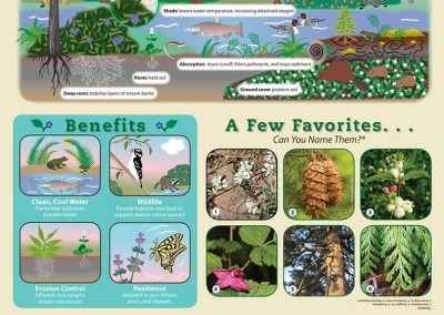 Native Plants Education Poster