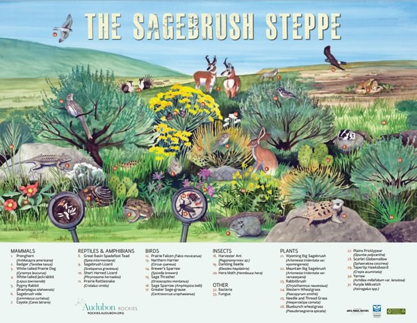 """The Sagebrush Steppe"" Poster from Audubon Rockies"