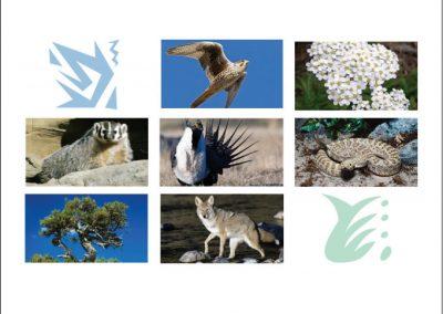 FireWorks Encyclopedia: Sagebrush Steppe Ecosystem Field Guide